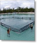 A Net For Turtle Research Metal Print