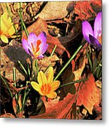 A New Season Blooms Metal Print