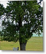 A One Horse Tree And Its Horse Metal Print