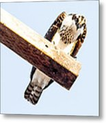 A Osprey Metal Print