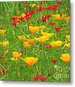 A Painting Tuscan Poppies Metal Print