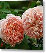 A Pair Of Colette Roses Metal Print