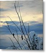 A Pair Of Melodious Blackbirds Metal Print
