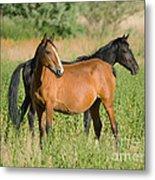 A Pair Of Mustangs Metal Print
