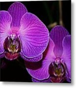 A Pair Of Purple Orchids From Bermuda Metal Print