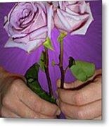 A Pair Of Purple Roses Metal Print