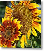 A Pair Of Sunflowers No.1 Metal Print