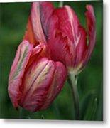 A Pair Of Tulips In The Rain Metal Print