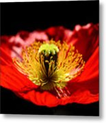 A Passion For Life Metal Print