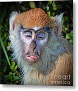 A Patas Baby Monkey Behaving Badly Metal Print