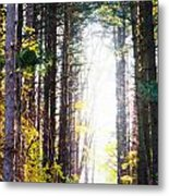 A Path In The Pines Metal Print