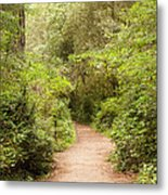 A Path To The Redwoods Metal Print