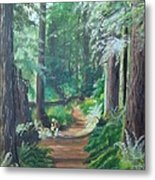 A Peaceful Walk In The Redwoods Metal Print