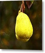 A Pear Tree Metal Print
