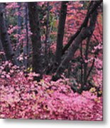 A Pink Autumn  Metal Print