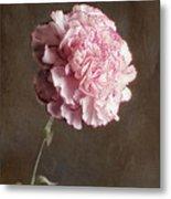 A Pink Carnation Metal Print