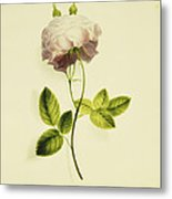 A Pink Rose Metal Print by James Holland