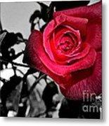 A Pop Of Red - Rose  Metal Print