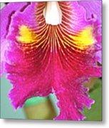 A Purple Cattelaya  Orchid Metal Print