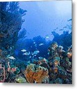 A Quiet Underwater Day Metal Print