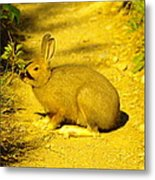 A Rabbit In My Path Metal Print