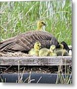 A Real Mother Goose Metal Print