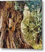 A Really Old Olive Tree Metal Print
