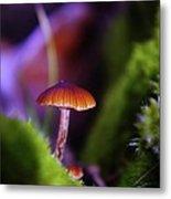 A Red Mushroom  Metal Print