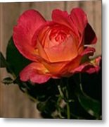 A Red Rosr Against A Weathered  Wood Background Metal Print