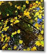 A Reflection Amongst The Leaves Metal Print