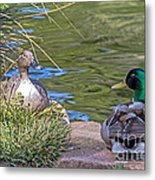 A Restful Moment Metal Print