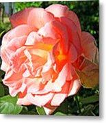 A Rose And A Rose Metal Print