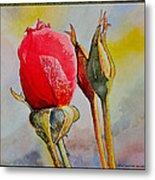 A Rose Awaitingtwo More Roses Metal Print