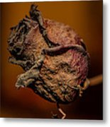 A Rose By Any Other Name... Metal Print