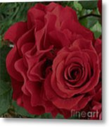 A Rose Within A Rose Metal Print