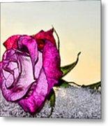 A Rose In Winter Metal Print