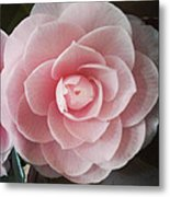 A Rose Is A Rose Is A Rose Metal Print