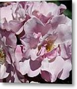 A Rose Named Blueberry Hill  Metal Print