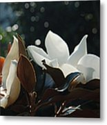 A Sea Of Magnolias Metal Print