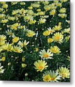 A Sea Of Yellow Daisys Metal Print