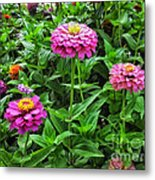 A Sea Of Zinnias 09 Metal Print