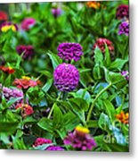A Sea Of Zinnias 14 Metal Print