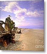 A Seagull On The Dungeness Spit Metal Print