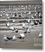 A Seagulls Life Metal Print by Sheldon Blackwell