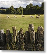 A Sheep's Field Metal Print
