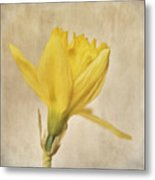 A Simple Daffodil Metal Print