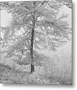 A Single Infrared Beech Tree Metal Print