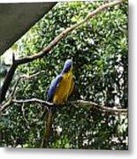 A Single Macaw Bird On A Branch Inside The Jurong Bird Park Metal Print