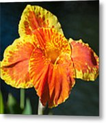 A Single Orange Lily Metal Print