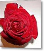 A Single Red Rose Metal Print